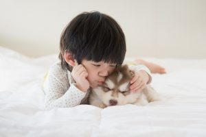 Teaching dog safety to toddlers